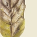 'Puka Leaf #1' - A3 Limited Edition Giclee Print