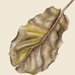 'Puka Leaf #2' - A3 Limited Edition Giclee Print