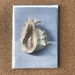 'Conch Shell' x 4 Fine Art Cards
