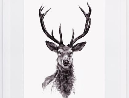 Deer A4 Print