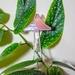 1 Mushroom plant friend