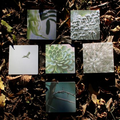 Six Card Pack - Nature Photo's
