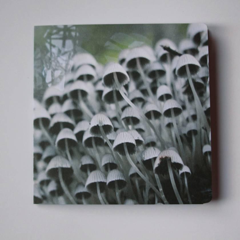 'Fairy Inkcap' Mushroom Greeting Card