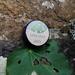 Kawakawa Healing Balm 8g Tub