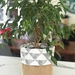 Large Triangle Silver on White Planter Sack