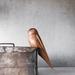 Perching Robin - Carved Wooden Bird