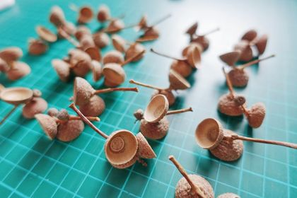 hand picked 25 Sets of DOUBLE Acorn Caps, Twin Acorn, triple acorn - Natural real acorns caps, craft supplies