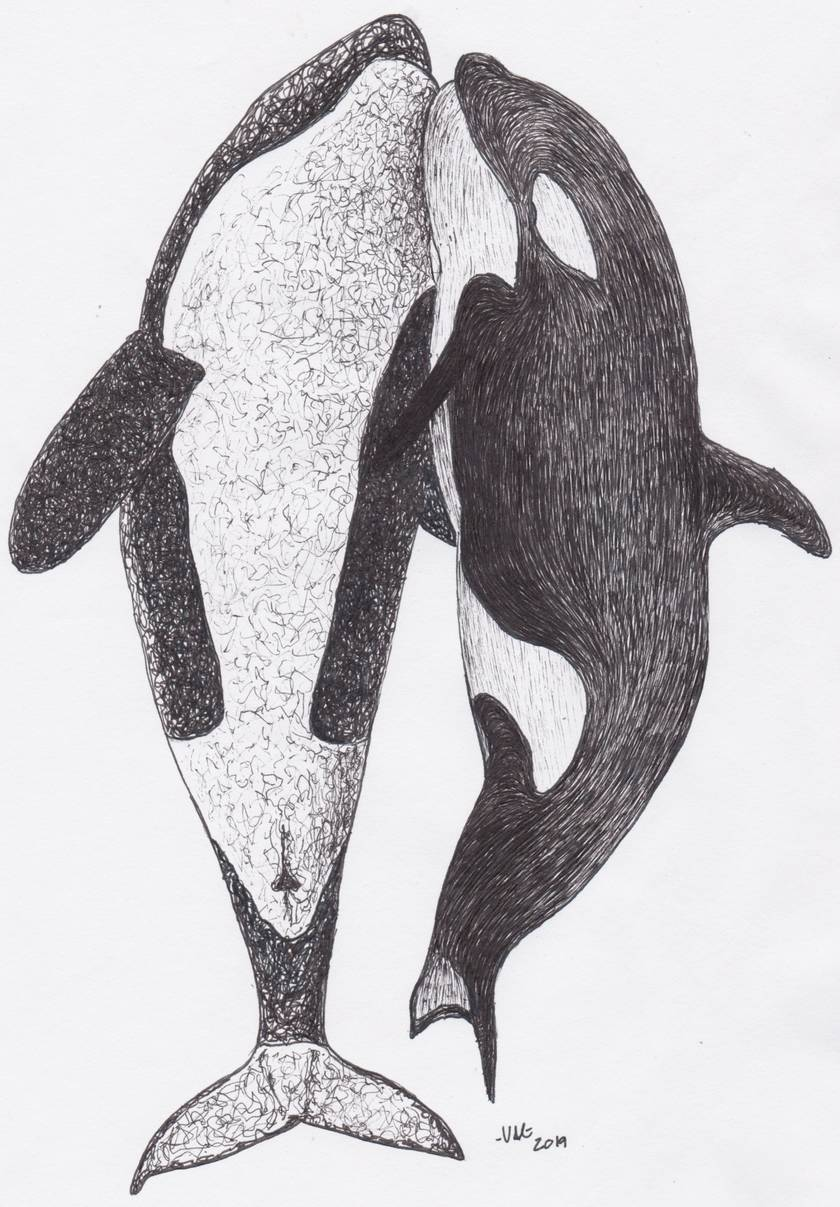 Orcas in Ink Prints