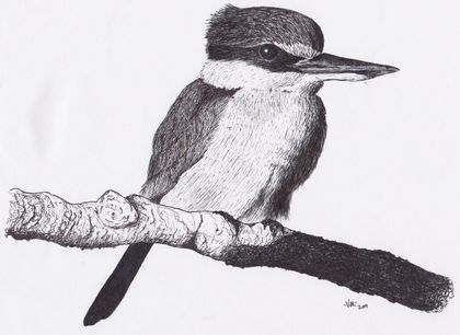 Kingfisher in Ink Original