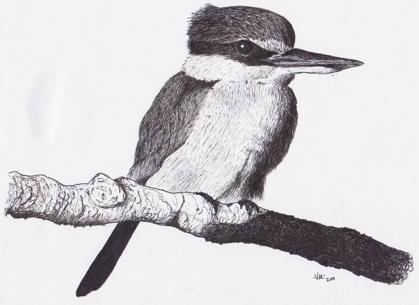 Kingfisher in Ink Original