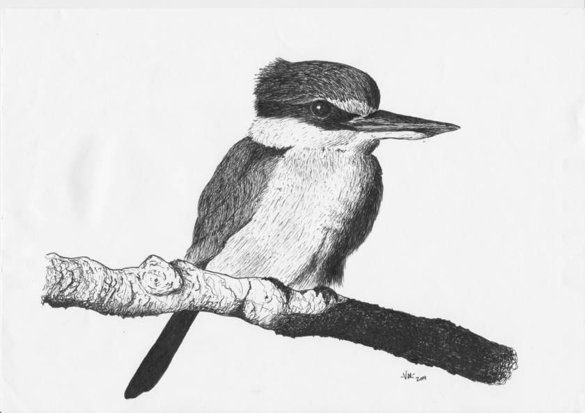 Kingfisher in Ink Print