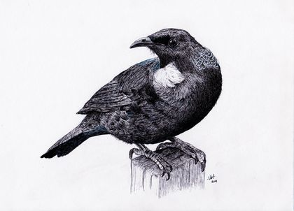 Tui in ink Print