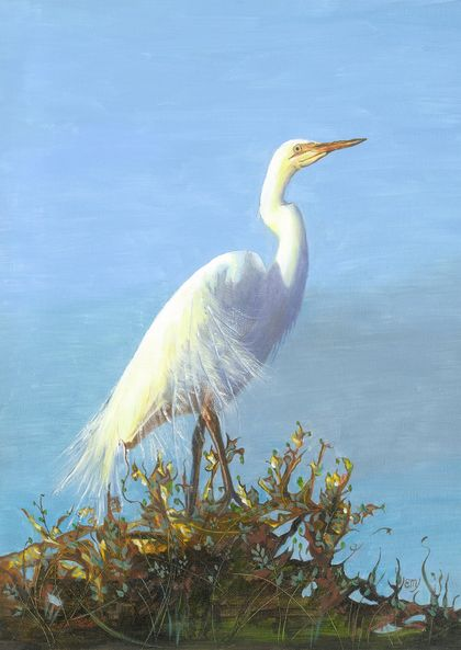 NZ White Heron (kotuku ) - Giclee print mounted on wood