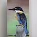 NZ King Fisher (kōtare)- Giclee print mounted on wood