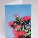 Kiwi Christmas Tree  |  Photography Christmas Cards