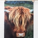 SALE $1 cards |  Highland Cattle | travel photography greeting cards