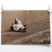 SALE $1 cards |  Cat | travel photography greeting cards