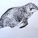 Little Blue Penguin - Original Drawing