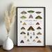 Little Native Moths of [You Choose the Region]