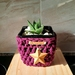 Plant cozie set of 2