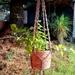 Beige macrame plant hanger