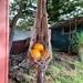 Small Macrame fruit or plant hanger