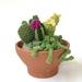 Cacti garden