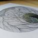 Anatomy of Lines #17