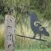 Kea Perching Metal Bang'n Bird