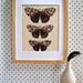 Red Admiral Butterfly (Kahukura) Print on Bamboo Veneer