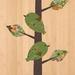 Rifleman (Titipounamu) Print on Bamboo Veneer