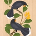 Huia on Karaka - Native NZ Bird Art Print on bamboo veneer