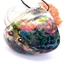 Colourful Paua Shell Pendant Necklace