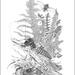 Weta- Fine Art Print