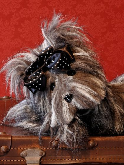 'Lucy' - a heirloom Terrier for life!