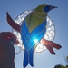 Stained Glass Bellbird