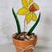 Plants You Can't Kill - Stained Glass Daffodil
