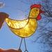 Chicken Winner – Stained Glass