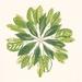 Coastal Natives Mandala - Giclee Print