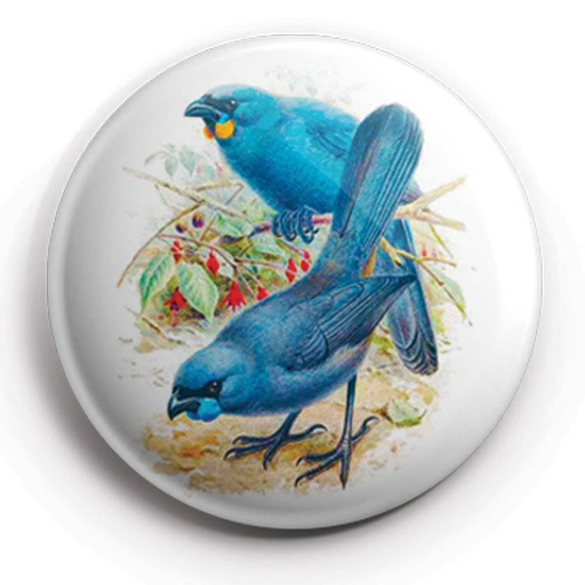 buller's birds of new zealand Magnets, featuring Hihi, Kea, Kokako